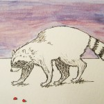 Violet sunset raccoon