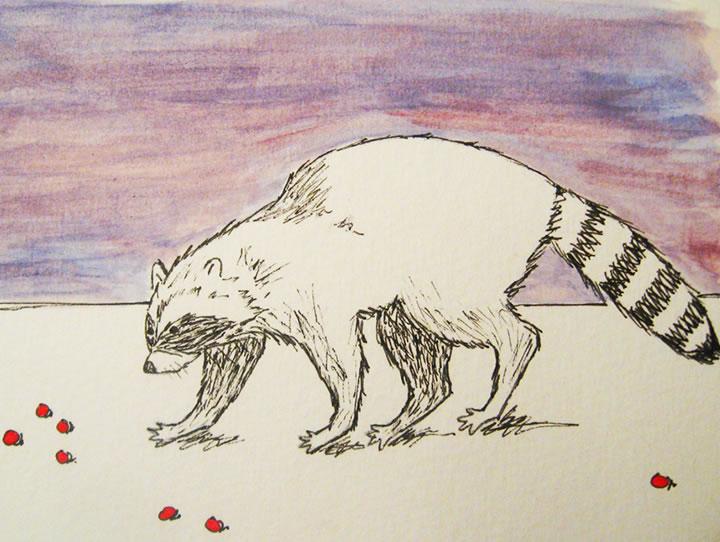 Violet sunset raccoon