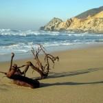 Driftwood at Montara beach